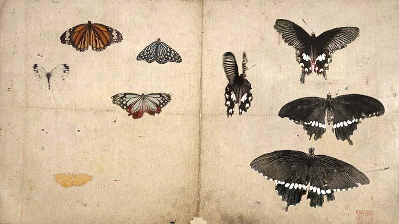 "KOSEMURA Mami 小瀬村真美 ""Butterfly"" 2008:2018, movie, 10 min, silent, frame 20 x 40 cm, edition work"