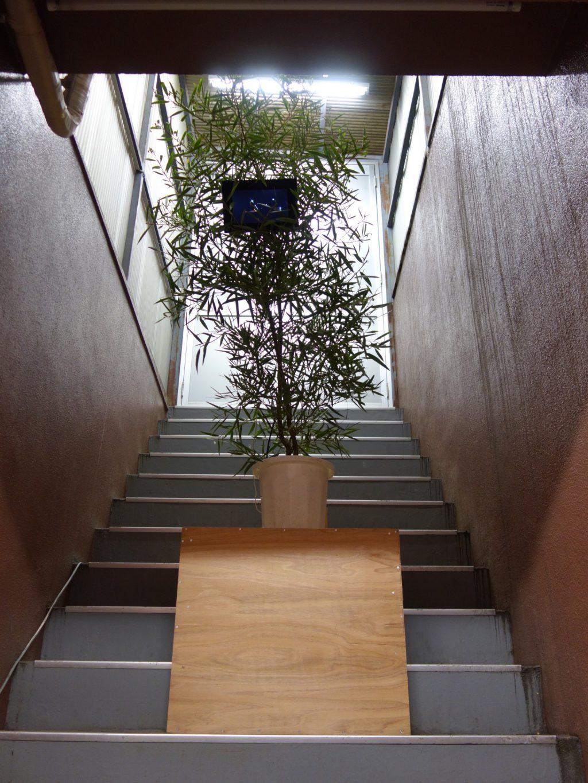 千葉正也 CHIBA Masaya 「jointed tree gallery #5 井出賢治、陳楚翹 (BUNCH) 「hello baby」」作品詳細は別紙参照 (Part B-2)