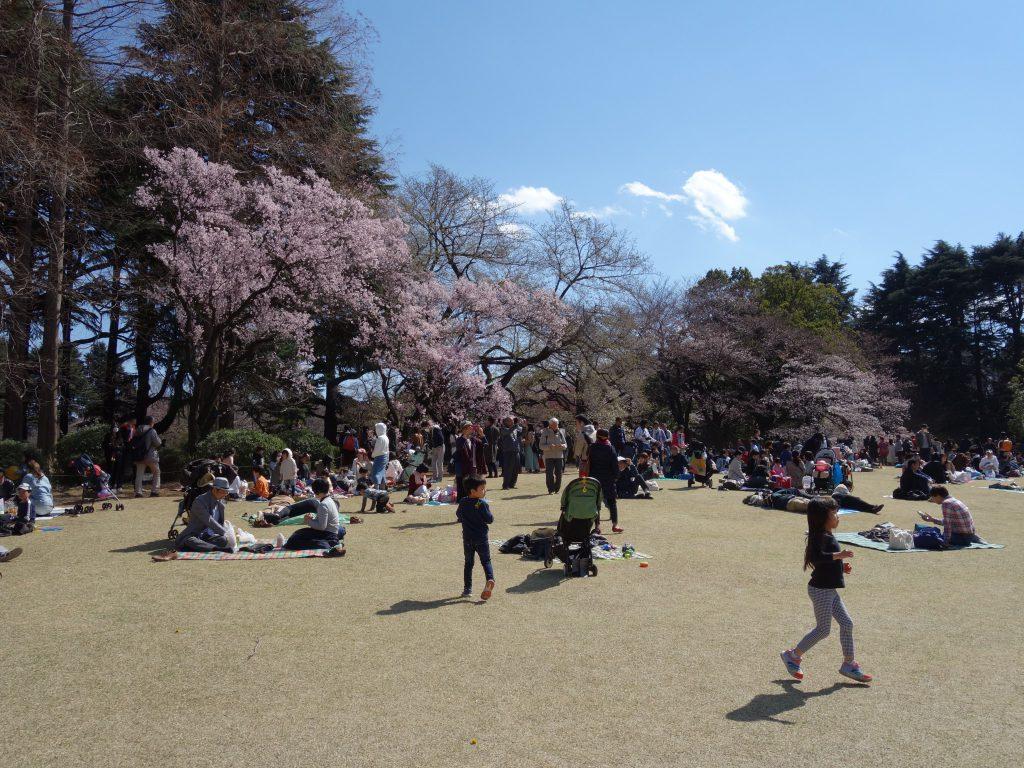 東京新宿御苑 桜の季節 Tokyo Shinjuku Gyoen