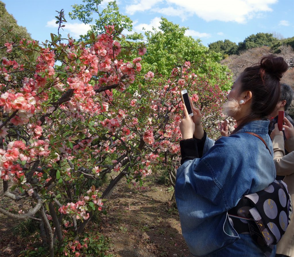 Shinjuku Gyoen National Garden 東京新宿御苑 桜の季節