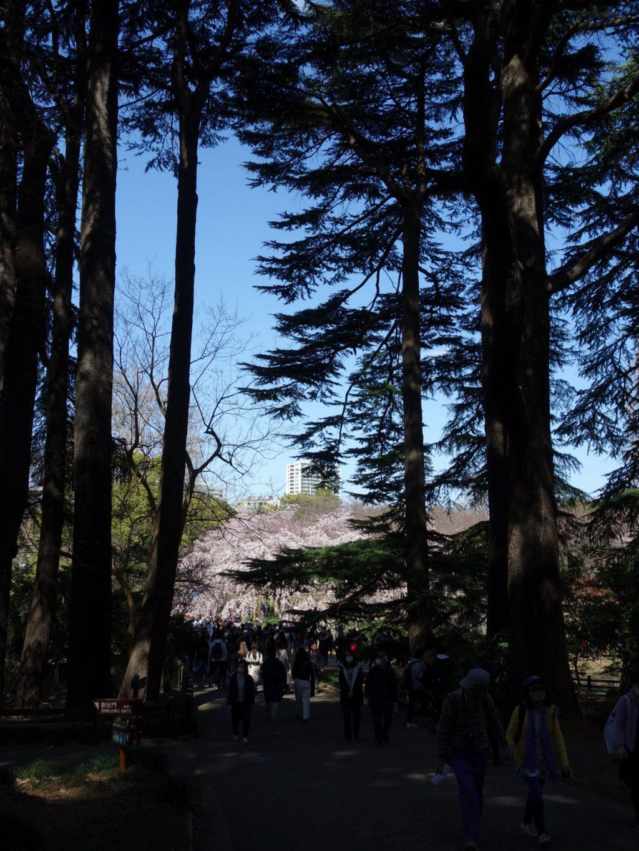 Tokyo Shinjuku Gyoen 東京新宿御苑 桜の季節