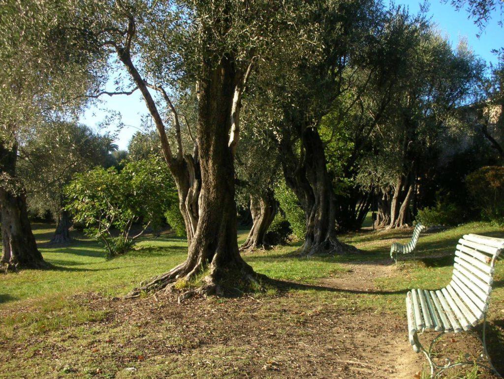 カーニュ=シュル=メール Pierre-Auguste Renoir ピエール=オーギュスト・ルノワールの庭 Garden