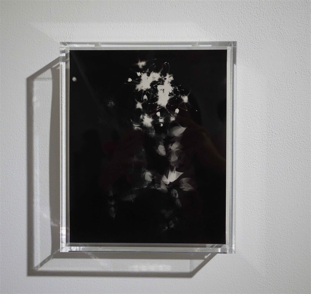 "NAGASHIMA Yurie 長島有里枝 ""Epimedium#2"" 2019, Gelatin Silver Print, unique"