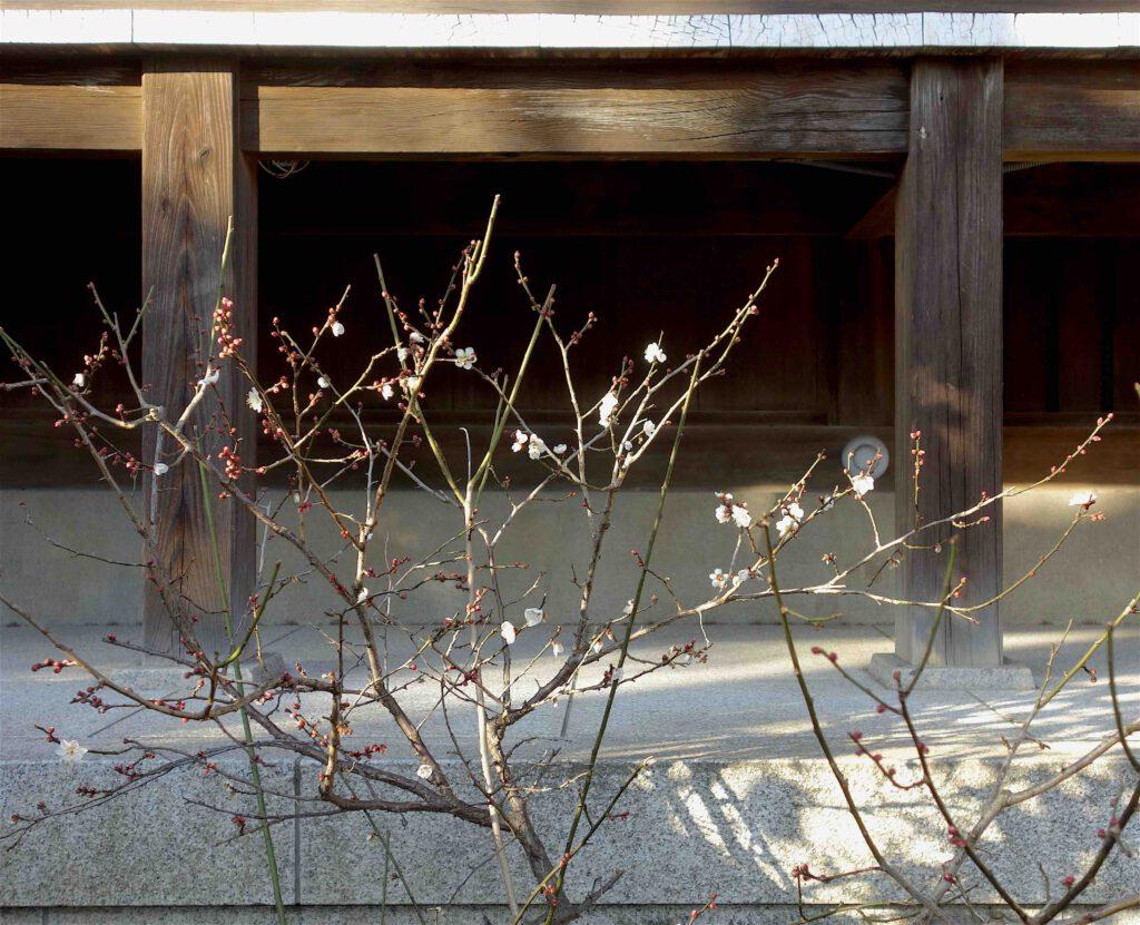 日本 美術 お正月 梅8