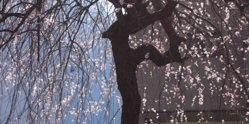 ピクチャリング・東京:ある普通の日。(6)